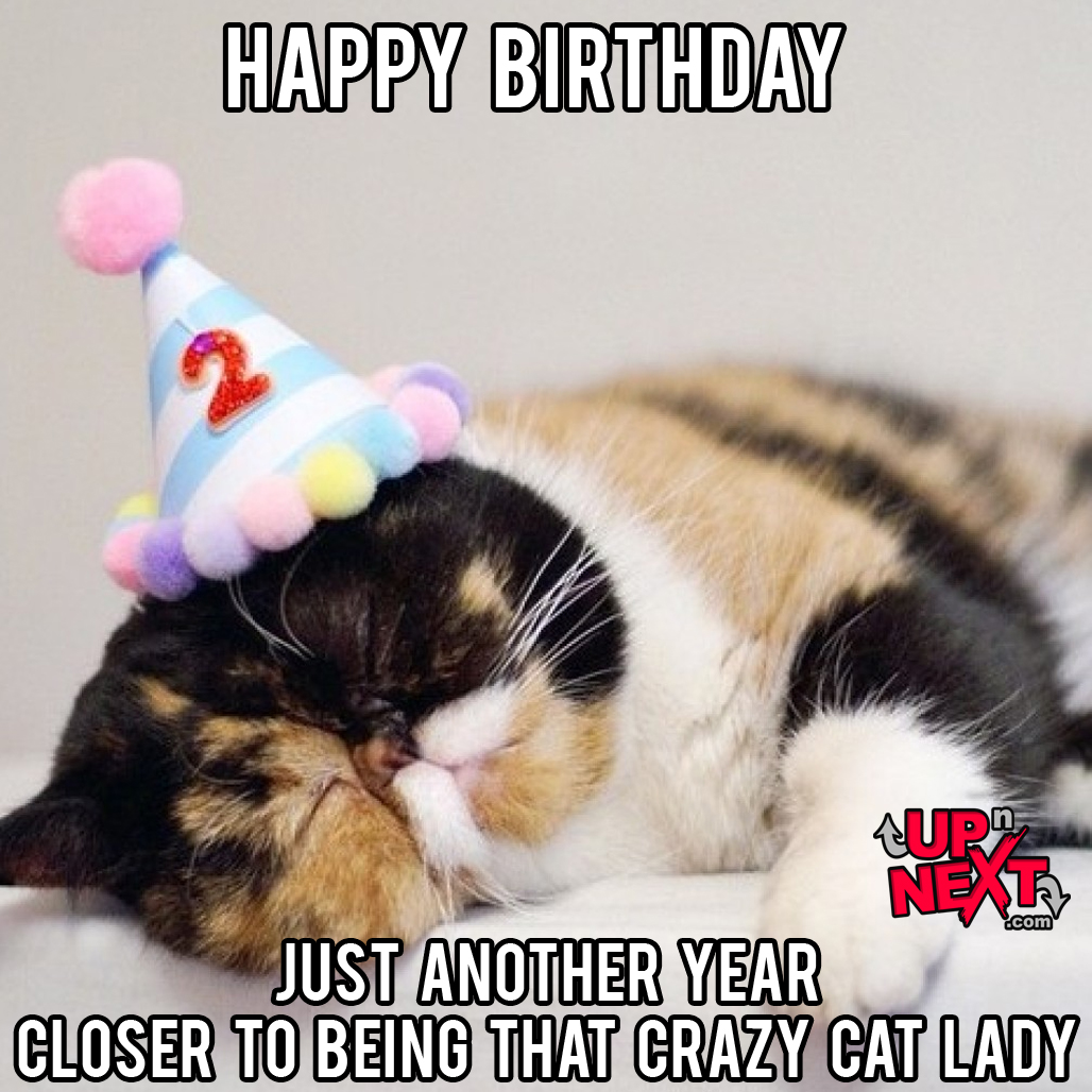 happy birthday funny cat meme