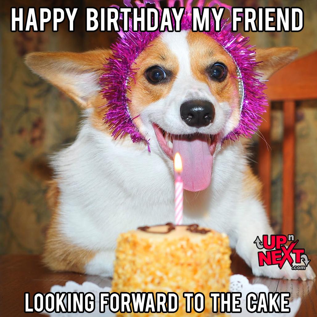 happy birthday meme dog