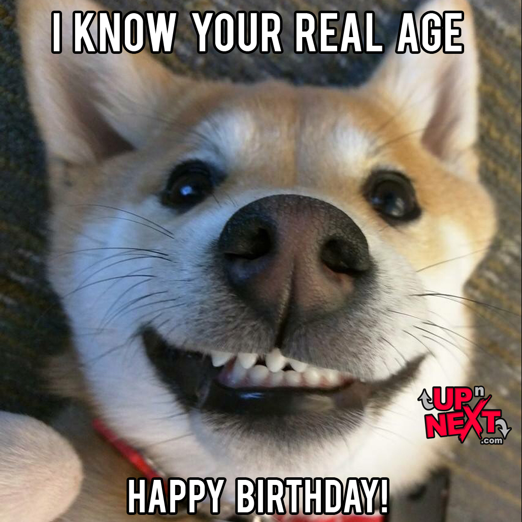happy birthday funny dog meme