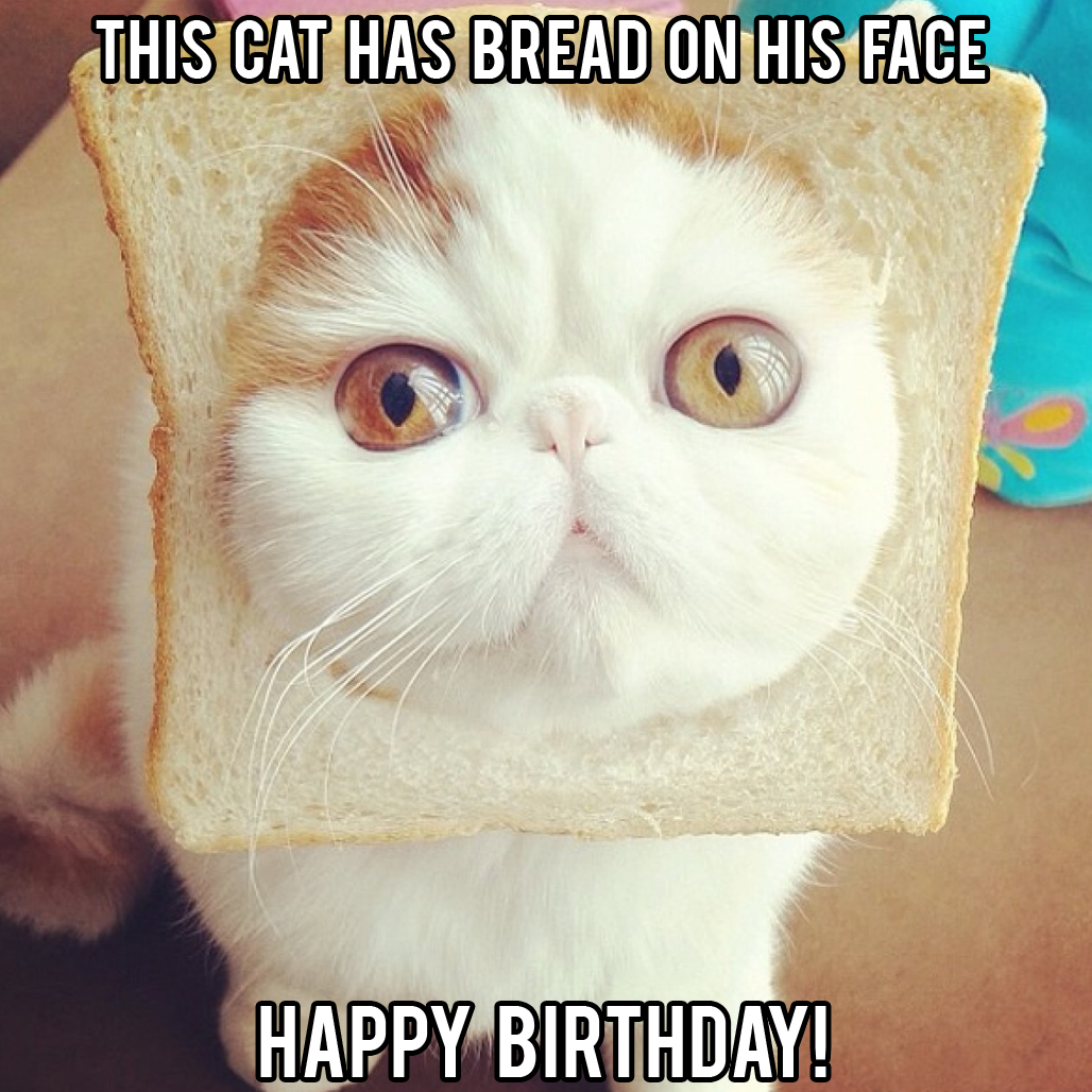 funny cat happy birthday meme
