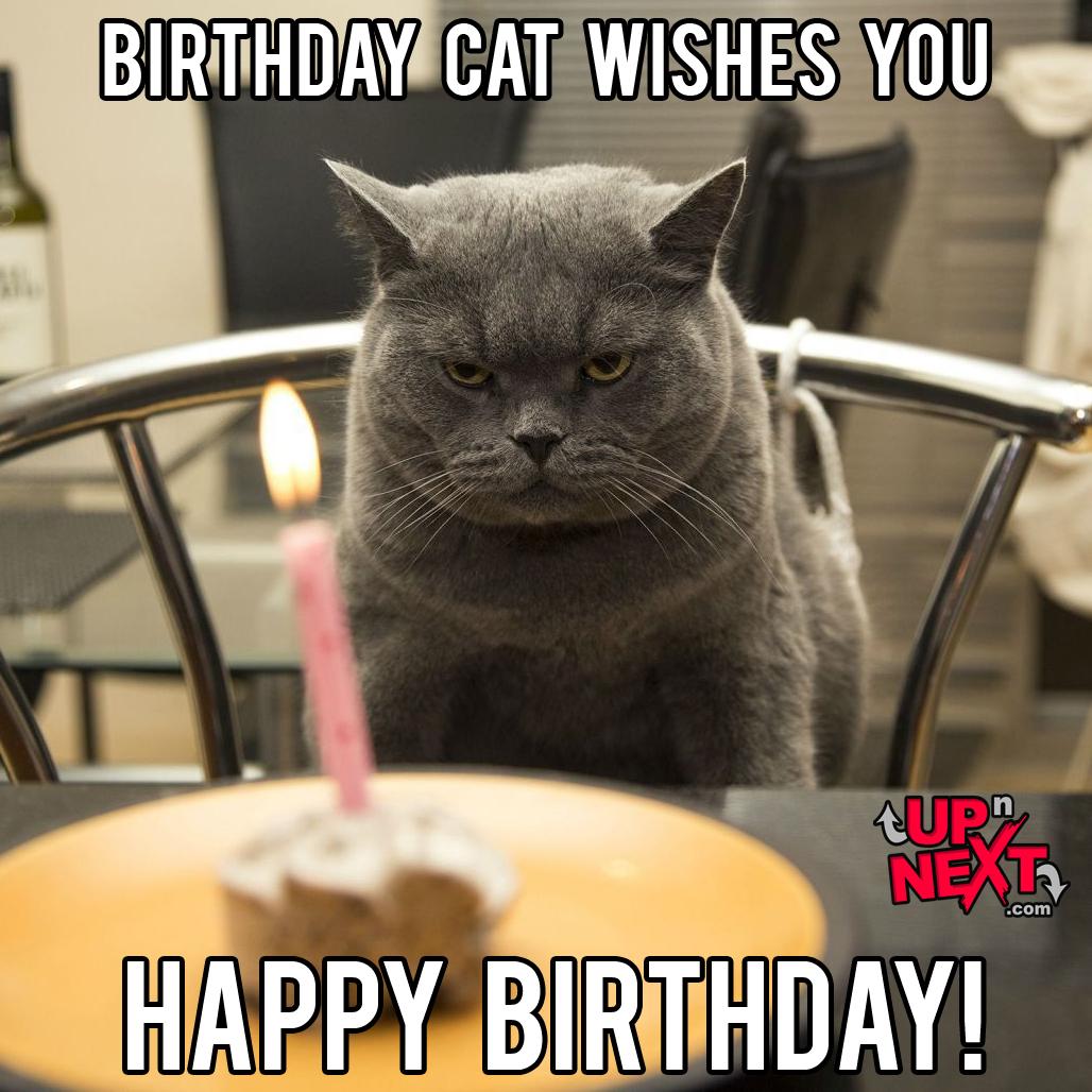 Happy Birthday Meme Cat