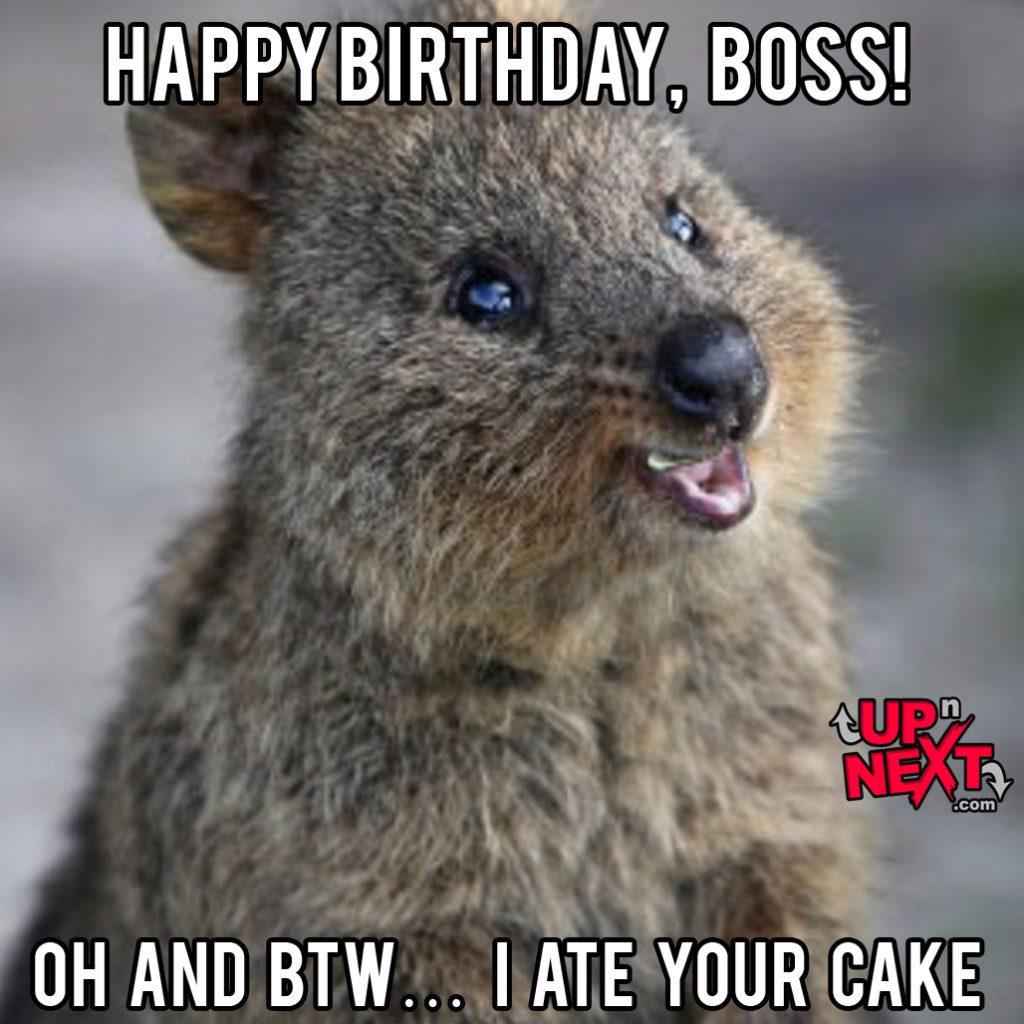 happy birthday boss man meme