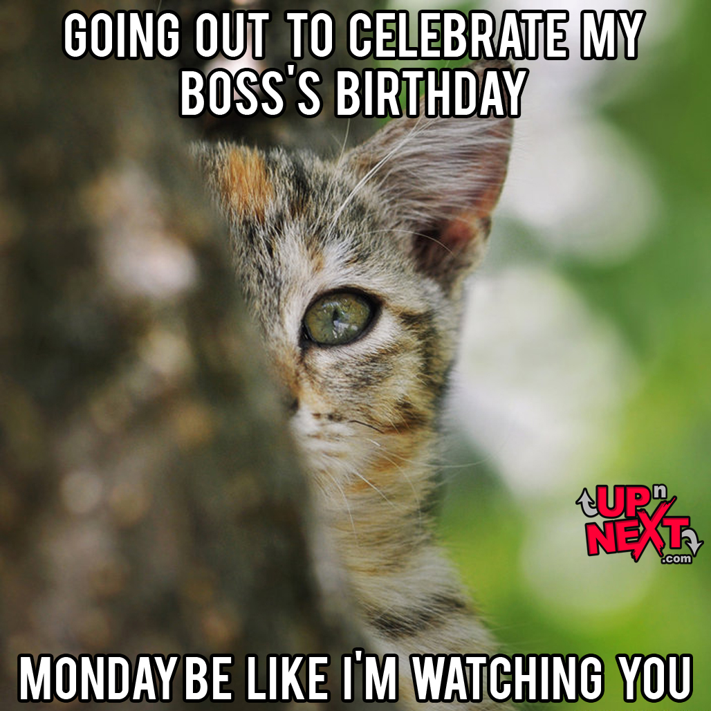 happy birthday boss lady meme