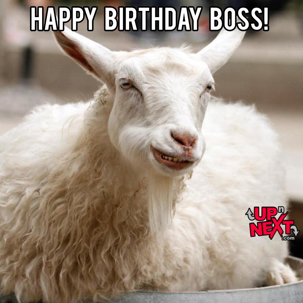 happy birthday boss funny meme